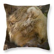 Gnaw Throw Pillow