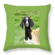 Goat Dental Floss Throw Pillow
