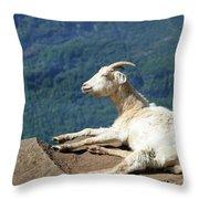 Goat Enjoy The Sun Throw Pillow