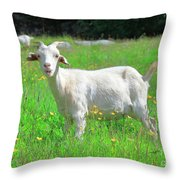 Goat Portrait  Throw Pillow