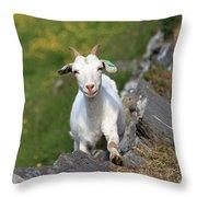 Goat Posing Throw Pillow
