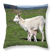 Goat With Just Born Little Goat Spring Scene Throw Pillow