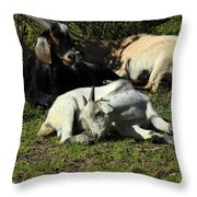 Goats Lying Under A Bush Throw Pillow