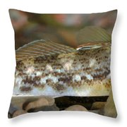 Goby Fish Throw Pillow