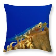 Goby On Wire Coral Throw Pillow