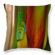 Gold Dust Day Gecko Throw Pillow