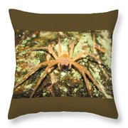 Gold Hunting Spider Throw Pillow