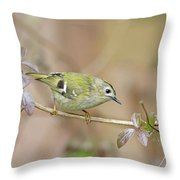 Goldcrest Throw Pillow