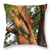 Golden Afternoon Glow II Throw Pillow