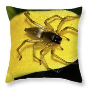Golden Arachnid  Throw Pillow