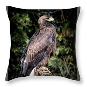 Golden Boy Throw Pillow