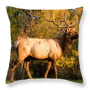Golden Bull Elk Portrait Throw Pillow