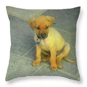 Golden Cunucu Puppy In Aruba Throw Pillow