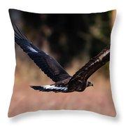 Golden Eagle Flying Throw Pillow