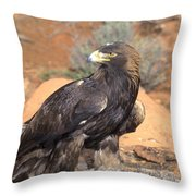 Golden Eagle On Rabbit Throw Pillow