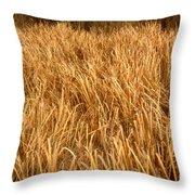 Golden Field Throw Pillow
