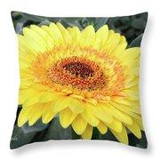 Golden Gerbera Daisy Throw Pillow