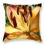 Golden Lily Flower Orange Brown Lilies Art Prints Baslee Troutman Throw Pillow