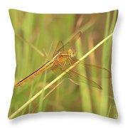 Golden Marsh Dragonfly Throw Pillow