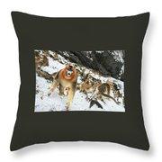 Golden Snub-nosed Monkey Throw Pillow