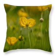 Golden Summer Buttercup 3 Throw Pillow