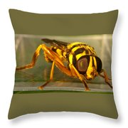 Golden Syrphid Throw Pillow