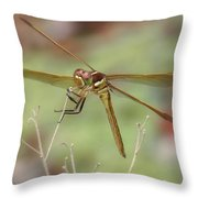 Golden-winged Skimmer Throw Pillow