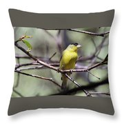 Goldfinch 042914a Throw Pillow