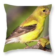 Goldfinch In The Early Morning  Throw Pillow