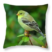 Goldfinch On Green Throw Pillow