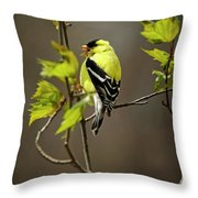 Goldfinch Suspended In Song Throw Pillow