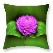Gomphrena - Globe Flower 003 Throw Pillow
