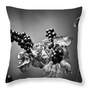 Gone To Seed Blackberry Lily Throw Pillow