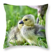 Goose Chick Throw Pillow