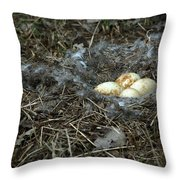 Goose Nest Throw Pillow