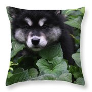 Gorgeous Alusky Puppy Playing Hide And Seek  Throw Pillow