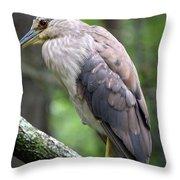 Gorgeous Bird Throw Pillow