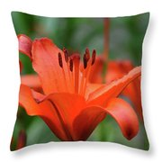 Gorgeous Blooming Orange Lily Flowering In A Garden Throw Pillow