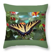 Gorgeous Butterfly Throw Pillow