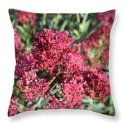 Gorgeous Cluster Of Red Phlox Flowers In A Garden Throw Pillow
