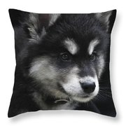 Gorgeous Eight Week Old Alusky Puppy Dog Throw Pillow