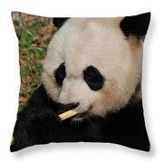 Gorgeous Face Of A Giant Panda Bear With Bamboo Throw Pillow