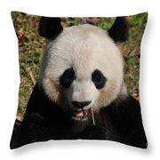 Gorgeous Face Of A Panda Bear Eating Bamboo Throw Pillow