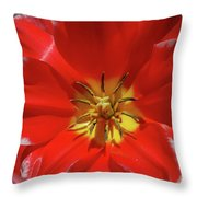 Gorgeous Flowering Red Tulip With A Yellow Center Throw Pillow