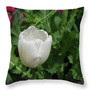 Gorgeous Flowering White Tulip In A Spring Garden Throw Pillow