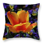 Gorgeous Flowering Yellow And Red Blooming Tulip Throw Pillow