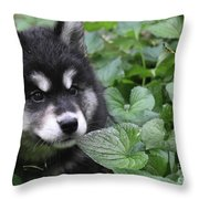 Gorgeous Fluffy Alusky Puppy Peaking Out Of Plants Throw Pillow