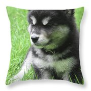 Gorgeous Fluffy Black And White Husky Puppy In Grass Throw Pillow