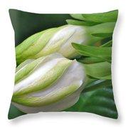 Best Buds Gorgeous Gardenia Flower Buds Throw Pillow