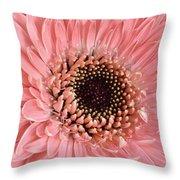 Gorgeous Gerbera Throw Pillow